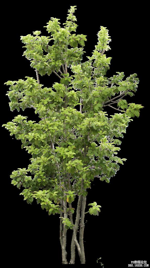 各类草类树木植物素材_ps图片素材 - ps教程论坛